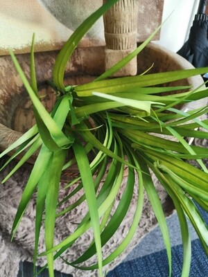 Kunst plant groen