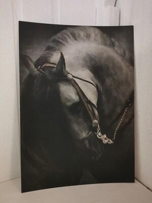 Sobere prent A5 paard