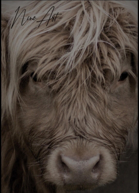 Tuinposter Schotse hooglander 1