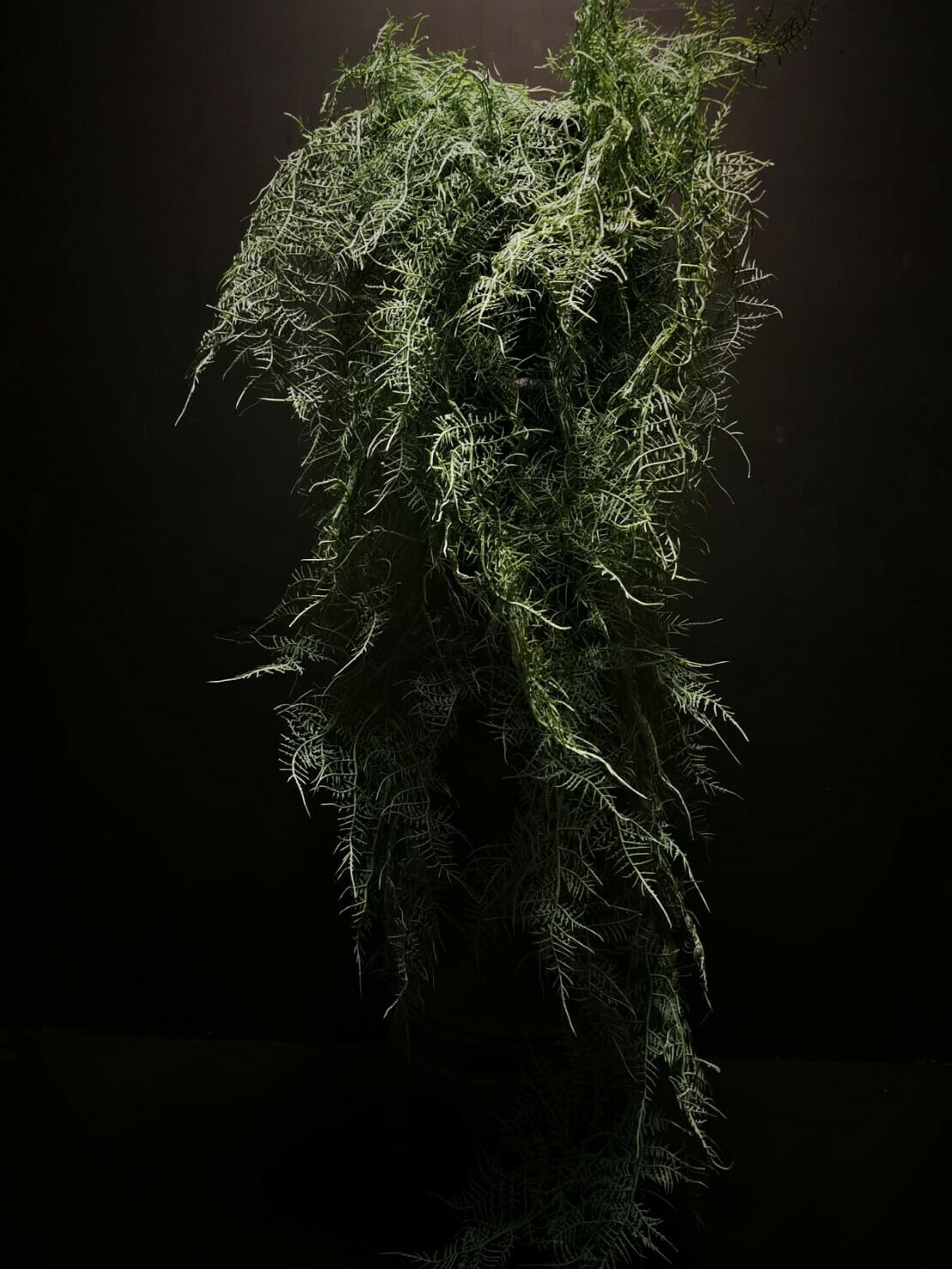 kunstplant Asparagus