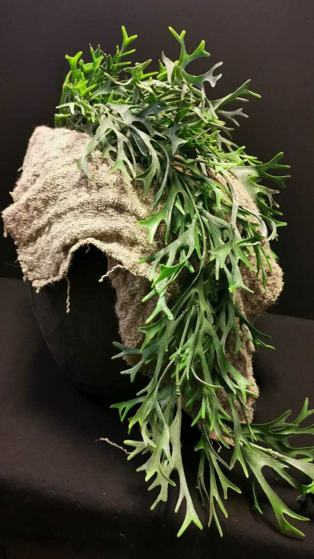 Kunstplant hertshoorn hangend