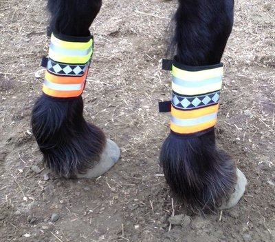 Safe Riders Leg Gear
