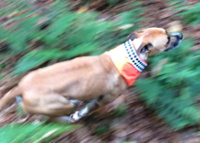 Safe Riders Trail Dog Gear