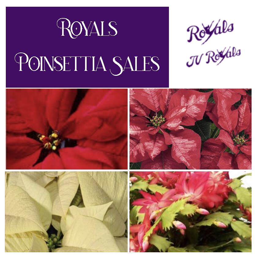 Royals Poinsettia Sale