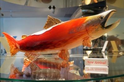 Spawning Westcoast Sockeye Salmon