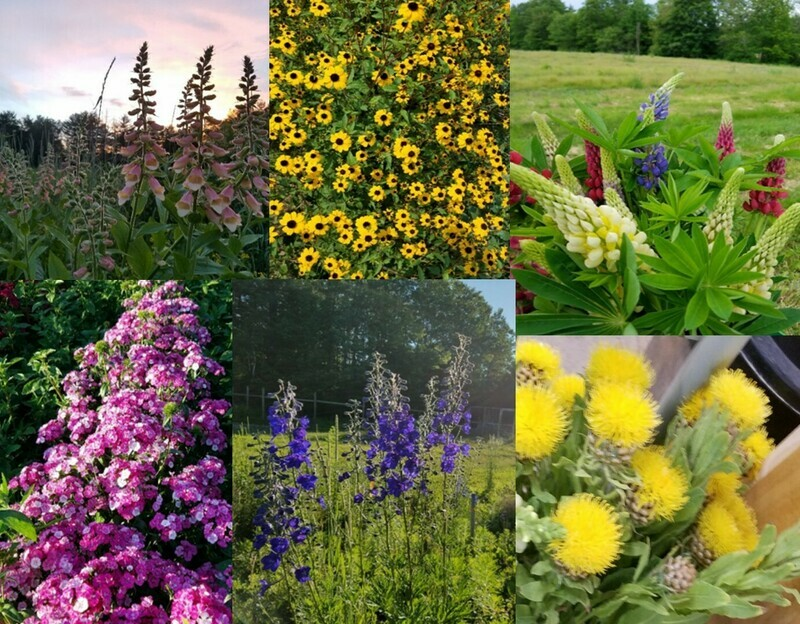 Tray of Perennial and Biennial Cutting Flowers