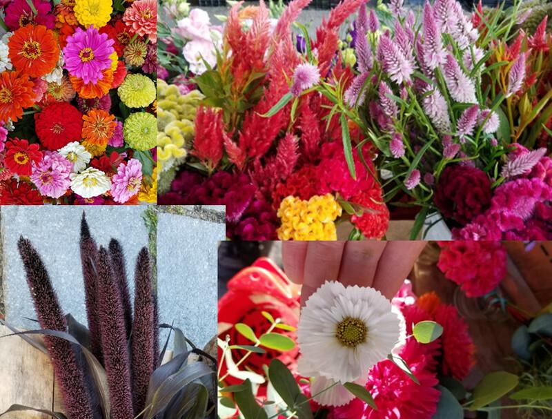 Tray of Warm-Weather-Loving Cut Flower Plants