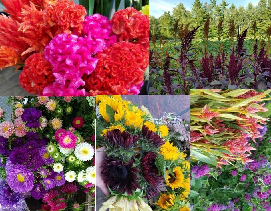 Tray of Late Season Cut Flower Plants