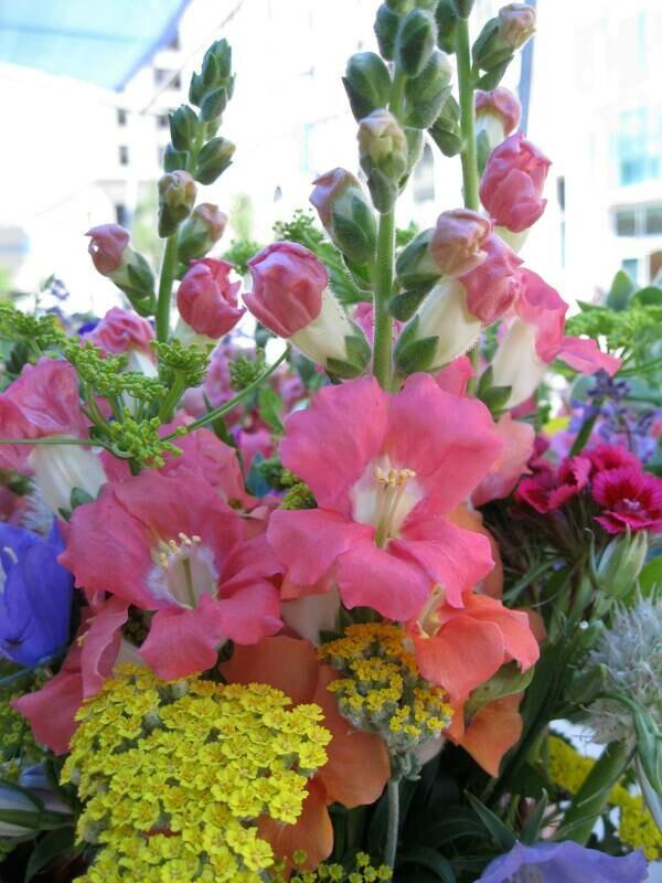 All 5 trays of Cut Flower Plants