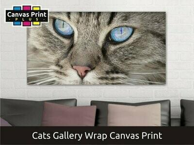 Cat Photo Canvas Print   Gallery Wrap
