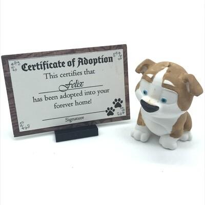 Adopt a puppy - Felix