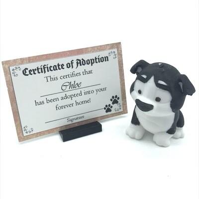 Adopt a puppy - Chloe