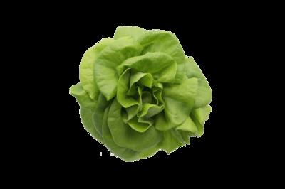 綠牛油生菜(連根)