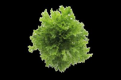 綠尖葉生菜(連根)