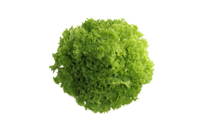 綠珊瑚生菜(連根)