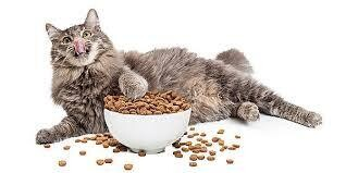 >>2020 DRY CAT CLOSEOUT<< ONLY 40 Cents Per Pound  Includes Variety Premium Quality Brand Name Dry Cat Foods 500+/- Pounds **WHILE SUPPLIES LAST**