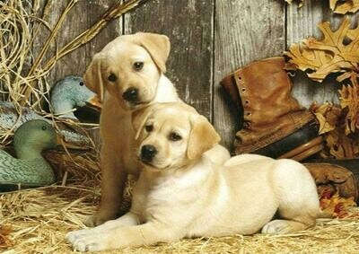 2 Labrador Puppies - Full Drill Diamond Painting - Specially ordered for you. Delivery is approximately 4 - 6 weeks.