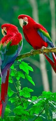 2 Parrots on a Tree - Full Drill Diamond Painting - Specially ordered for you. Delivery is approximately 4 - 6 weeks.