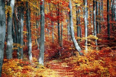 Autumn Forrest  - Full Drill Diamond Painting - Specially ordered for you. Delivery is approximately 4 - 6 weeks.