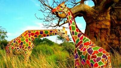 Colourful Giraffes   - Full Drill Diamond Painting - Specially ordered for you. Delivery is approximately 4 - 6 weeks.