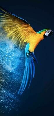Blue And Yellow Parrot - Full Drill Diamond Painting - Specially ordered for you. Delivery is approximately 4 - 6 weeks.
