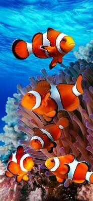 Clown Fish - Full Drill Diamond Painting - Specially ordered for you. Delivery is approximately 4 - 6 weeks.