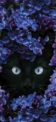 Cat In Purple Flowers  - Full Drill Diamond Painting - Specially ordered for you. Delivery is approximately 4 - 6 weeks.