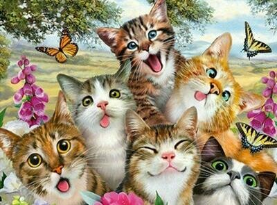 Crazy Cats - Full Drill Diamond Painting - Specially ordered for you. Delivery is approximately 4 - 6 weeks.