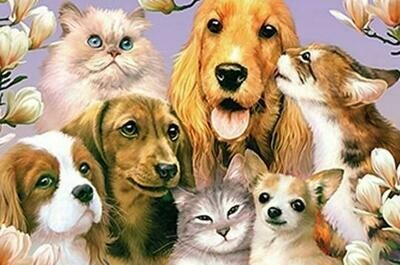 Cats And Dogs- Full Drill Diamond Painting - Specially ordered for you. Delivery is approximately 4 - 6 weeks.