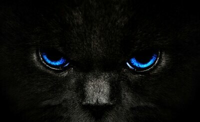Black Cat Eyes (Blue) - Full Drill Diamond Painting - Specially ordered for you. Delivery is approximately 4 - 6 weeks.