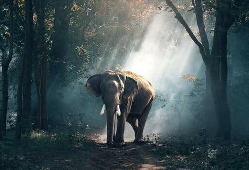 Elephant 09 - Full Drill Diamond Painting - Specially ordered for you. Delivery is approximately 4 - 6 weeks.