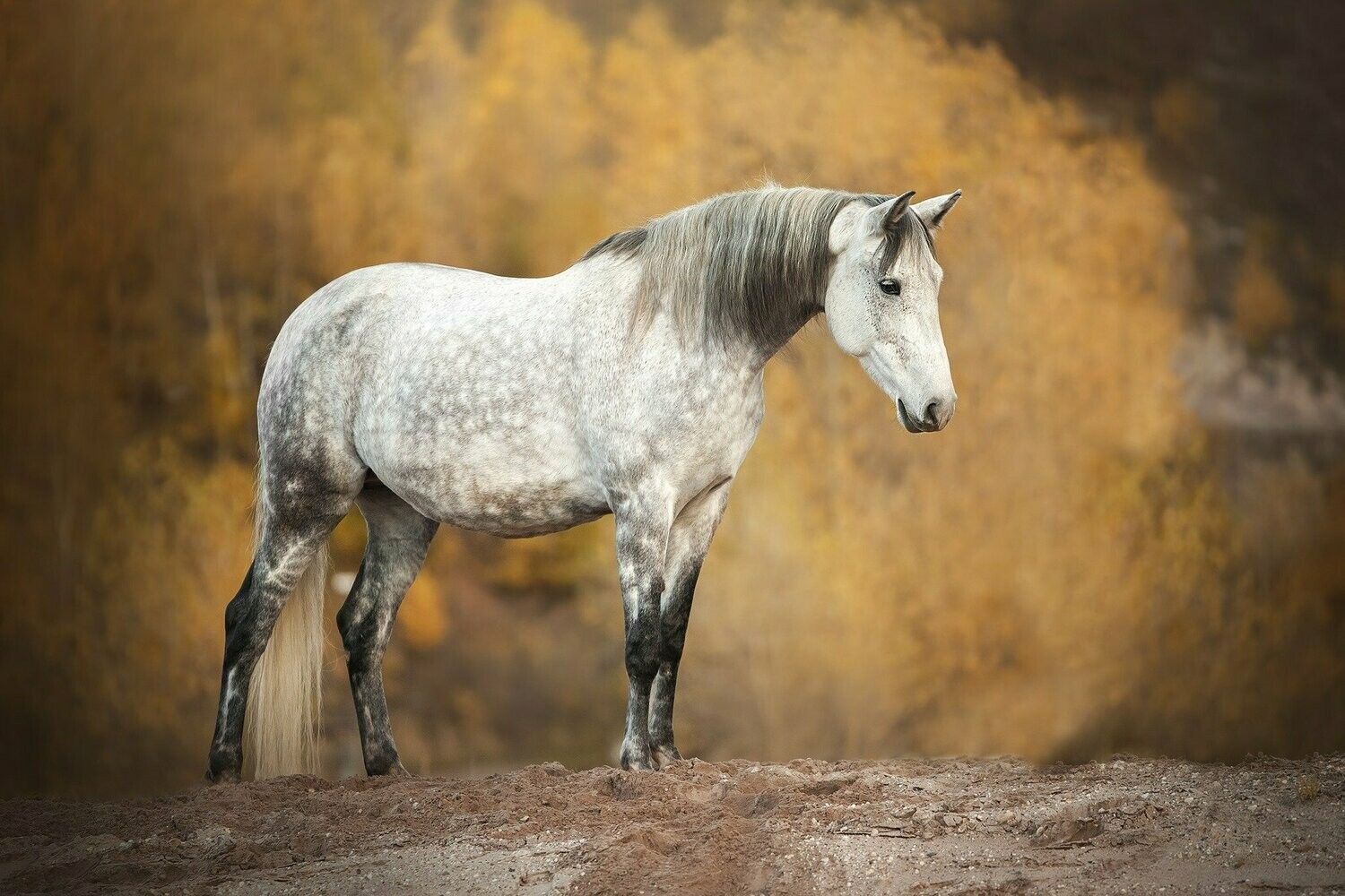 Horse 1 - Full Drill Diamond Painting - Specially ordered for you. Delivery is approximately 4 - 6 weeks.