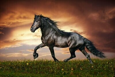Horse 6 - Full Drill Diamond Painting - Specially ordered for you. Delivery is approximately 4 - 6 weeks.