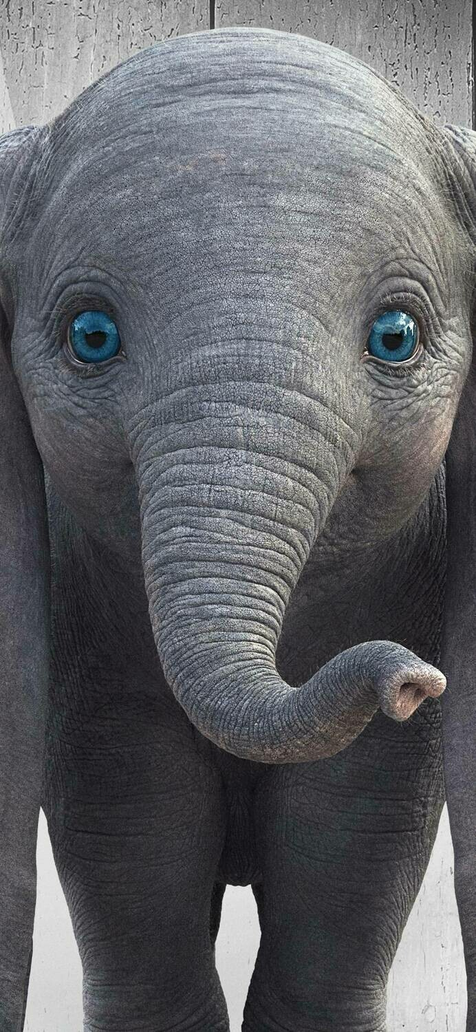 Elephant 05 - Full Drill Diamond Painting - Specially ordered for you. Delivery is approximately 4 - 6 weeks.