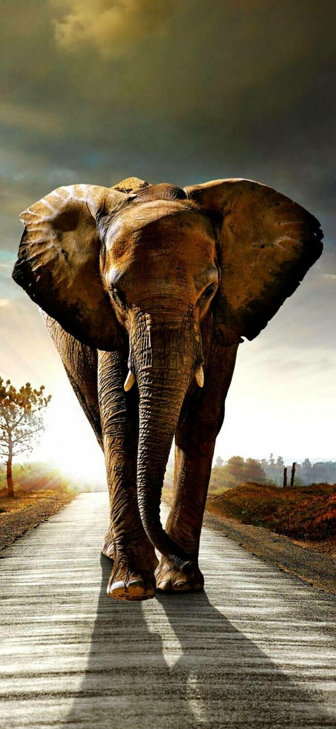 Elephant 03 - Full Drill Diamond Painting - Specially ordered for you. Delivery is approximately 4 - 6 weeks.