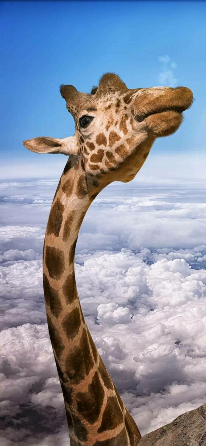 Giraffe In Sky  - Full Drill Diamond Painting - Specially ordered for you. Delivery is approximately 4 - 6 weeks.