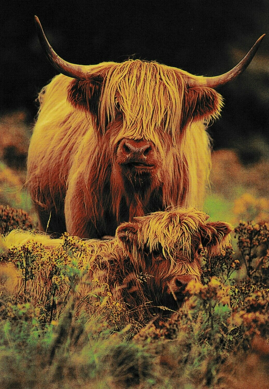 Highland Cows - Full Drill Diamond Painting - Specially ordered for you. Delivery is approximately 4 - 6 weeks.