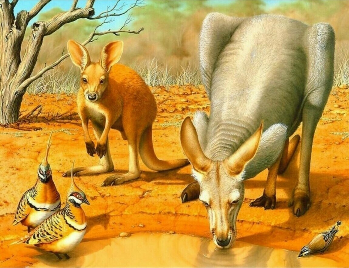 Kangaroos - Full Drill Diamond Painting - Specially ordered for you. Delivery is approximately 4 - 6 weeks.