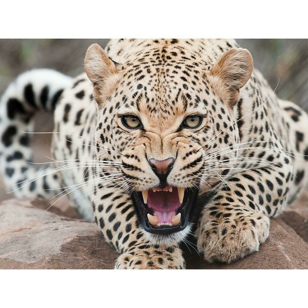 Leopard Angry- Full Drill Diamond Painting - Specially ordered for you. Delivery is approximately 4 - 6 weeks.