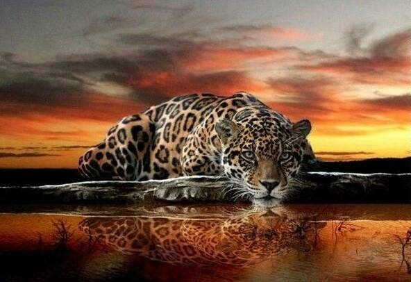 Leopard at sunset- Full Drill Diamond Painting - Specially ordered for you. Delivery is approximately 4 - 6 weeks.