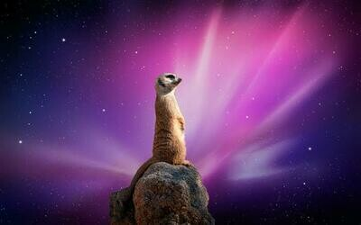 Meerkats 03 - Full Drill Diamond Painting - Specially ordered for you. Delivery is approximately 4 - 6 weeks.