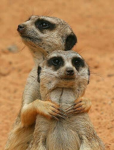 Meerkats 05 - Full Drill Diamond Painting - Specially ordered for you. Delivery is approximately 4 - 6 weeks.