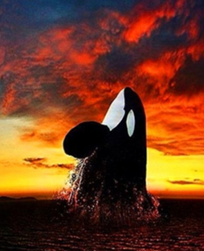 Orca- Full Drill Diamond Painting - Specially ordered for you. Delivery is approximately 4 - 6 weeks.