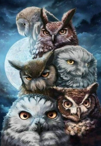 Owls Galore - Full Drill Diamond Painting - Specially ordered for you. Delivery is approximately 4 - 6 weeks.