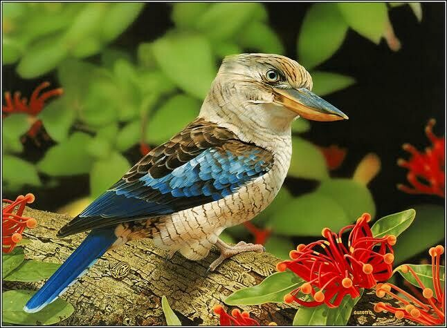 Kookaburra 2 - Full Drill Diamond Painting - Specially ordered for you. Delivery is approximately 4 - 6 weeks.