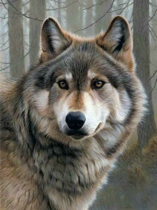 Lone Wolf - Full Drill Diamond Painting - Specially ordered for you. Delivery is approximately 4 - 6 weeks.