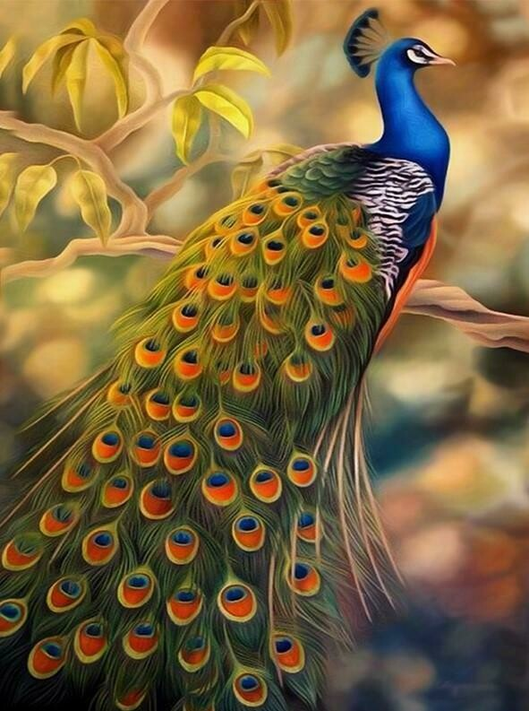 Peacock 2 - Full Drill Diamond Painting - Specially ordered for you. Delivery is approximately 4 - 6 weeks.