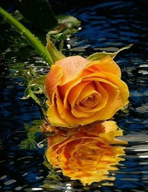 Orange Rose Reflection - Full Drill Diamond Painting - Specially ordered for you. Delivery is approximately 4 - 6 weeks.