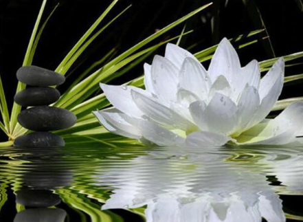 Peaceful Lotus - Full Drill Diamond Painting - Specially ordered for you. Delivery is approximately 4 - 6 weeks.
