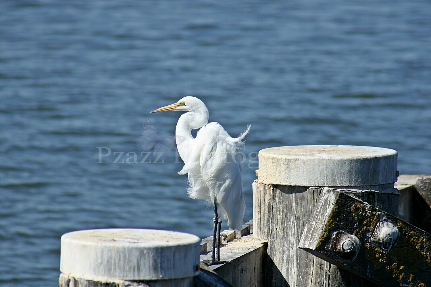 Pzazz Photography - Egret - Full Drill Diamond Painting - Specially ordered for you. Delivery is approximately 4 - 6 weeks.